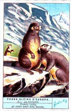 Liebig S1279 Alpine Fauna No 3 La Marmotta