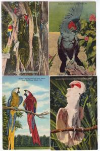 4 - Parrot Jungle, Miami FL
