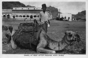 Yemen Aden Camel at rest real photo postcard