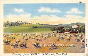 Loch Sheldrake NY Unused