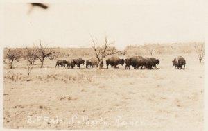 RP: Buffalo , Colbert's Ranch , 1910s