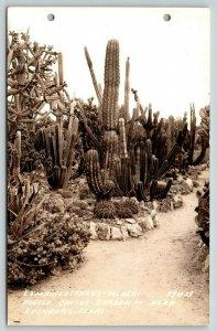 Edinburg Texas~Pirtle Cactus Garden~Sagauro~Lemaireocereus-Weberi~1930s RPPC
