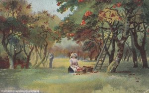 CUCKFIELD , England , 1910 ; Gathering Apples