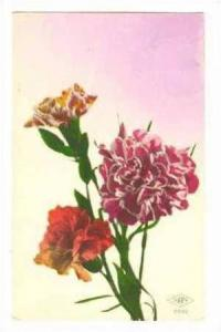 RP, 3 Hand-Colored Carnations, 00-10s