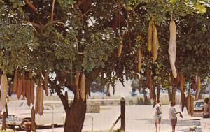 Florida Miami Frog City Florida Novelty Manufacturing Company & Sausage Tree