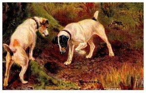 Dog ,, Fox Terriers