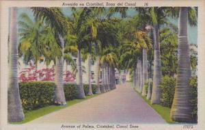 Panama Avenue Of Palms Cristobal Canal Zone
