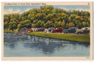 Feeding Ducks, Forest Park, Springfield MA