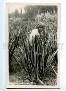 169449 ADJARA Types Phormium New Zealand flax Vintage PHOTO PC