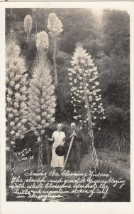 RP: Blooming YUCCA Plants, California , 20-30s