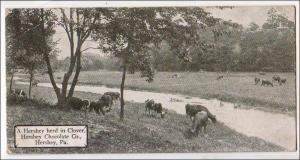 Herd in Clover, Hershey Chocolate Co, Hershey PA