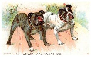 Dog   ,  English Bulldog