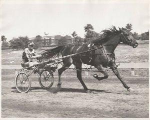 LONG ISLAND, NY, 60-70s; Roosevelt Raceway, Louette Hanover w/ Stanley Dancer