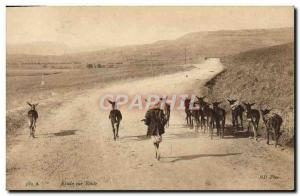 Old Postcard Study Of Road Donkeys Mules