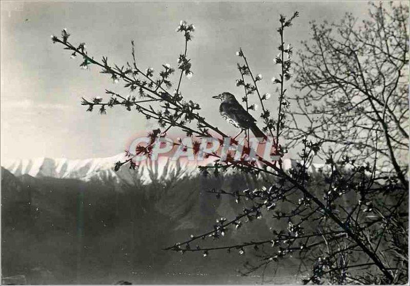 Postcard Modern Italy Mountains Bird Stamp Tax Paris