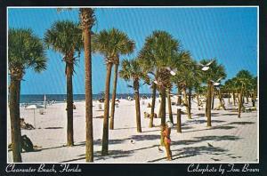 Florida Clearwater Beach White Sand