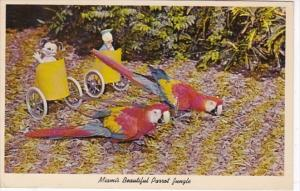 Florida Miami Bumper and Jasper Performing Macaws Pulling Chariots Parrot Jun...
