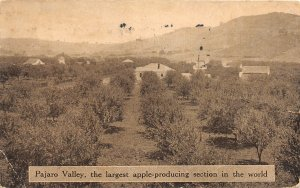 G26/ Pajaro Valley California Postcard 1915 Apple Orchard Homes Farm