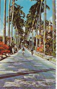 Barbados St Michael Belleville Palm Avenue