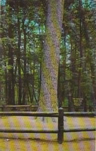 Michigan Grayling The Monarch Pine