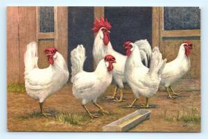 Postcard Chickens Rooster Stehli Switzerland B39