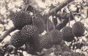 RP Durians , Malay, 00-10s