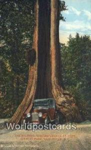 British Columbia, Canada Big Tree, Stanley Park Vancouver  Big Tree, Stanley ...