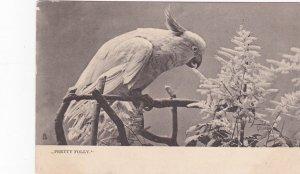 Pretty Polly , 00-10s ; TUCK