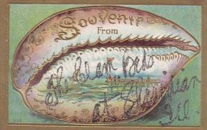 Illinois Souvenir From From Shridian Illinois