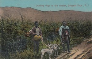 BENGUET , Philippines , 1900-10s ; Leading Dogs to market