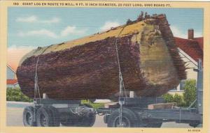 Washington Giant Log En Route To Saw Mill Curteich