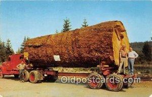 Giant Fir Log Oregon & Washington, USA Unused