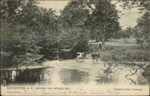Saugerties NY Sawkill & Catskills Cows c1905 TUCK Postcard