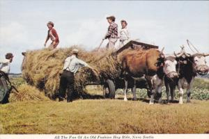 NOVA SCOTIA, Canada; All the Fun of an Old fashioned Hay Ride, Bulls, 50-70s