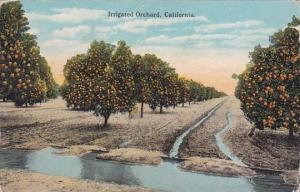 Irrigated Orchard California 1924