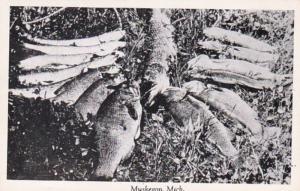 Michigan Muskegon Fishing Day's Catch