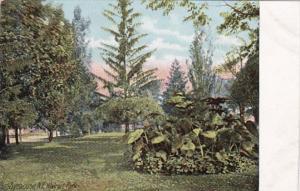 New York Syracuse Scene In Walnut Park