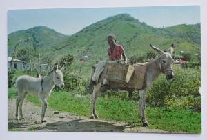 "1967 ""Tortolo"" Donkey Transportaion in Virgin Islands Vintage Chrome Postcard"