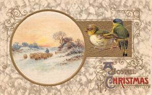 A Joyful Christmas, Birds, Oiseaux, Winter, sheep herd, flock