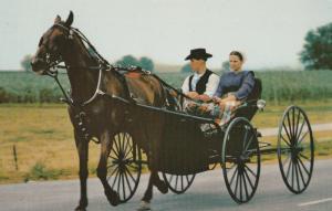 Amish Courting Buggy Postcard Pennsylvania Dutch Horse