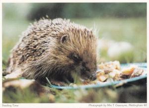 Mettingham Norfolk Hedgehog Postcard