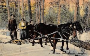 Vermont~Maple Sugar Grove~Farm Family With Horse Team~Buckets~Ladies~Sled~1913