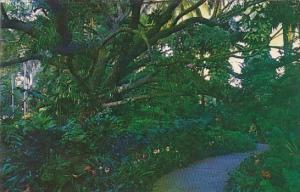 Florida Saint Petersburg The Spreading Live Oak With Rare And Exotic Orchids ...