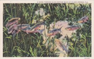 Florida Silver Springs Scene Through Thru Glass Bottom Boats Curteich