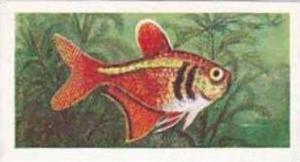 Mitchum Foods Vintage Trade Card Aquarium Fish 1957 2nd Series No 38 Flame Fish
