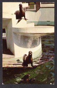 NY - Buffalo Zoological Gardens– California Sea Lions