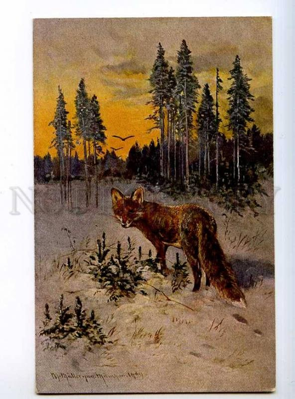 235181 Winter Hunt FOX in Snow by MULLER Vintage color PC