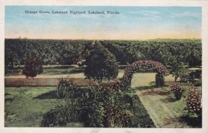 Florida Lakeland Orange Grove Lakeland Highland
