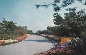 LONG ISLAND, New York, 1940s-Present; Fall Flowers Central Mall