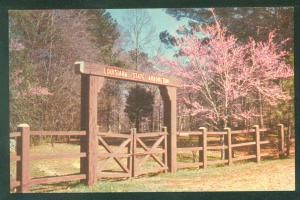 Louisiana State Arboretum Botanical Garden Entrance  Postcard
